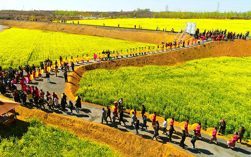 金沙河红薯岭万亩油菜花、油葵花,供游客免费观赏