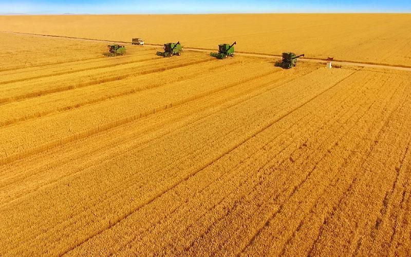 南和县金沙河农作物种植专业合作社