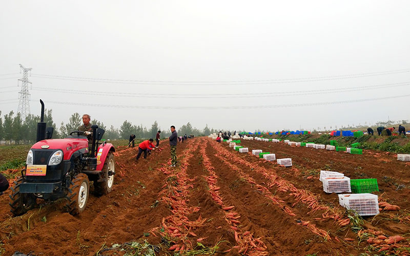 河北红薯岭农业开发有限公司